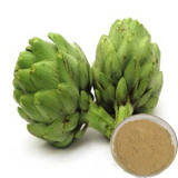 Artichoke Extract Review