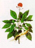 Read full Panax ginseng Review