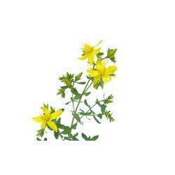 St. Johns Wort Review